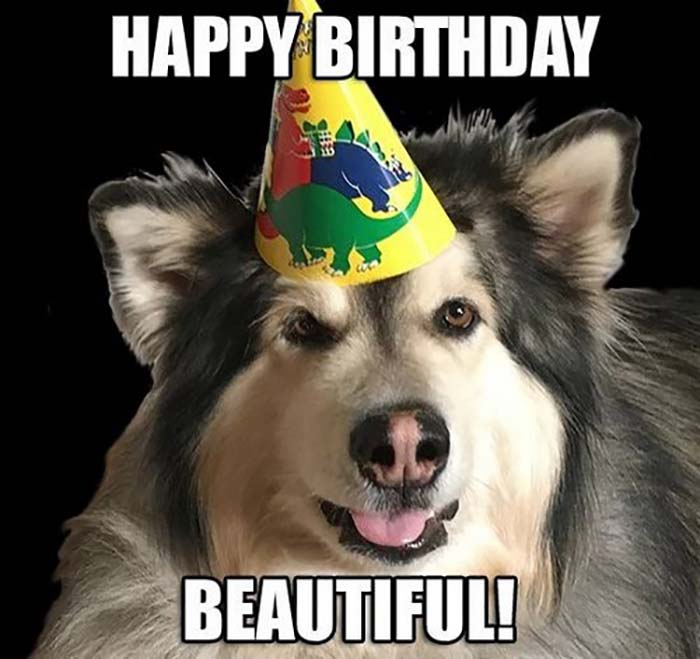 happy birthday dog meme for her