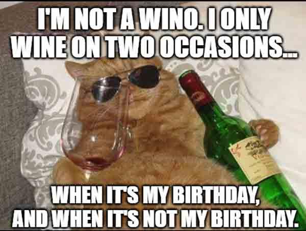 cat drinking wine birthday meme