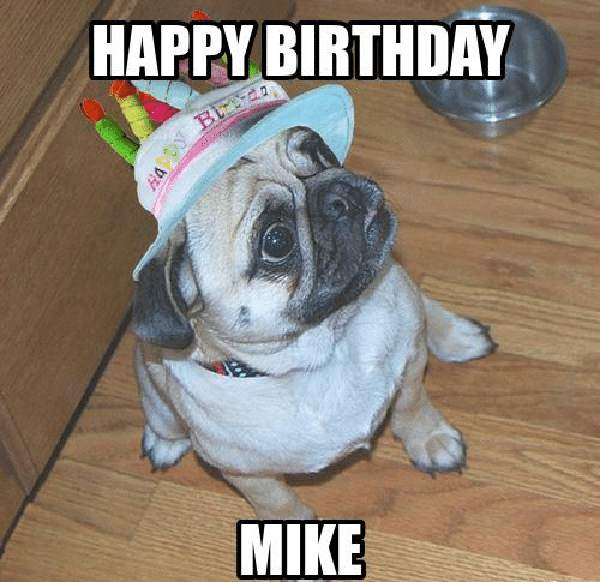 happy birthday mike meme with french bull dog
