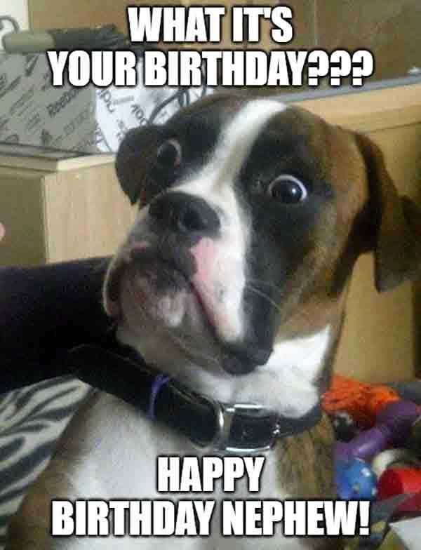 happy birthday nephew with dog meme