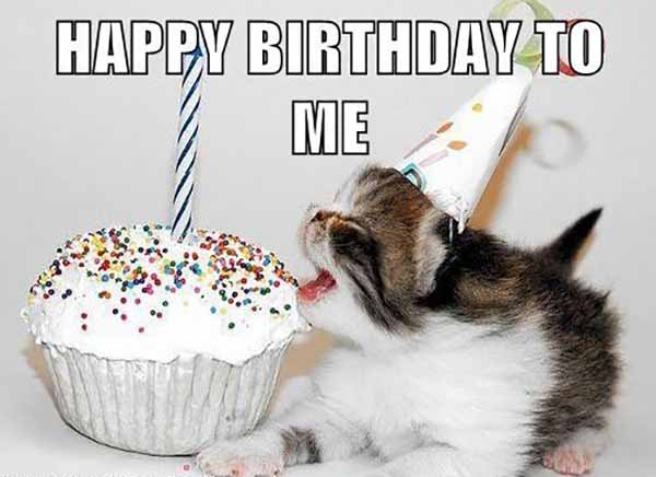 happy birthday to me cats meme